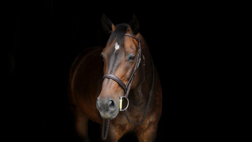 5 Gründe für einen Eintrag auf pferd-austria.at